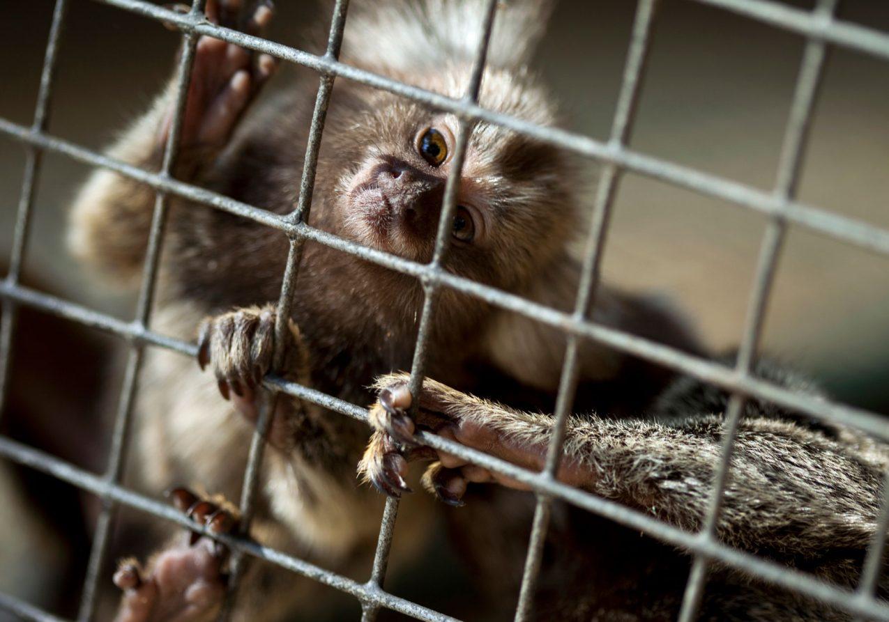 monkey-PC94LCB.jpg